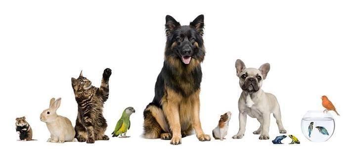 Tienda de mascotas: El güau de +Kota