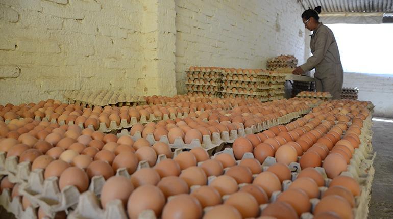 vender huevo es buen negocio