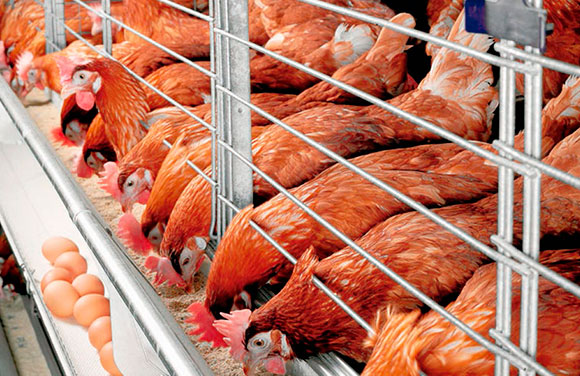 Vender huevo es buen negocio ¿Cómo vender huevos? 1